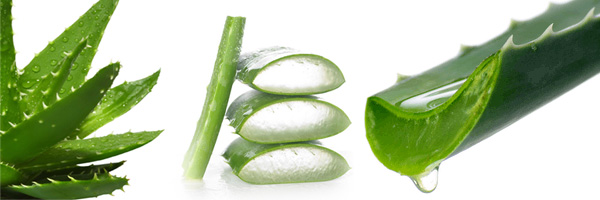 About All About Aloe Vera